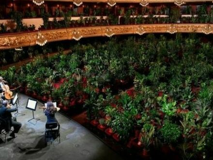 Po miesiącach kwarantanny pierwszy koncert w operze w Barcelonie został zagrany dla 2 300 roślin