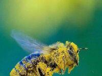 Pracowita pszczółka