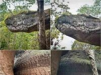 Wężowa skała