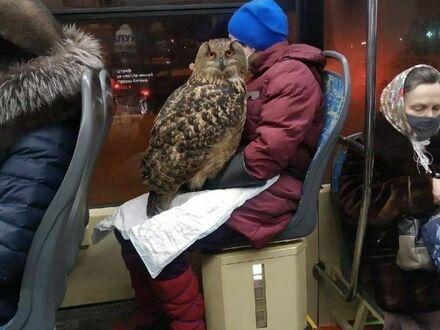 Czarodziejka spotkana w autobusie