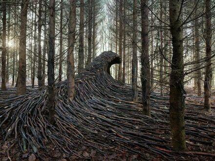 Leśna fala