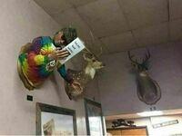 Na ścianie mojego lokalnego rzeźnika wisi trofeum z weganina