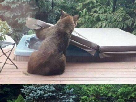 Nawet niedźwiedzie potrzebują od czasu do czasu odrobiny relaksu