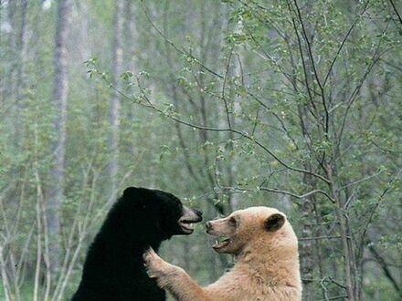Chwilę przed powstaniem pandy
