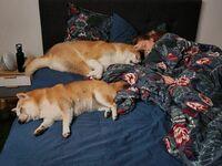 Czasami muszę spać na kanapie w salonie  To powód dlaczego.