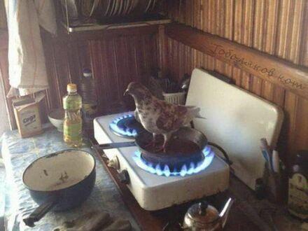 Dziś na obiad będą gołąbki