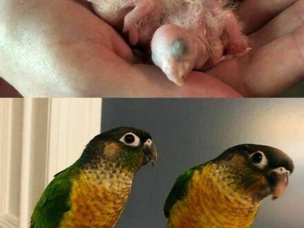 Tak szybko dorastają - 3 miesiące różnicy między zdjęciami