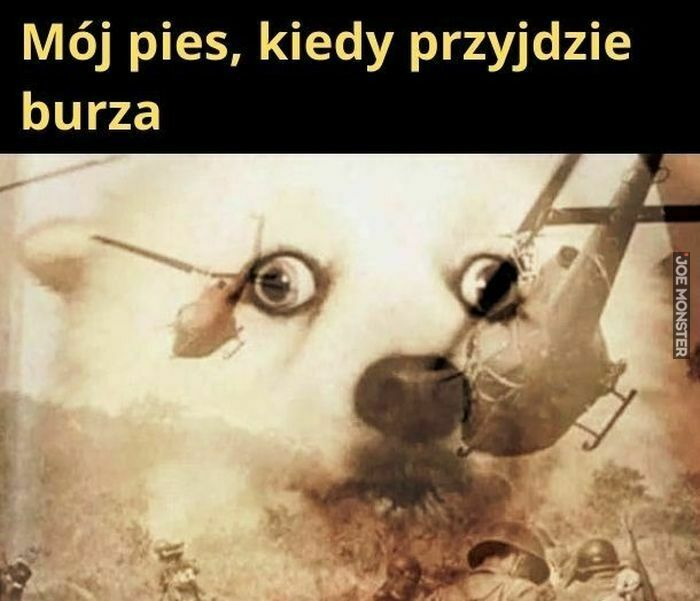 mój pies kiedy przyjdzie burza