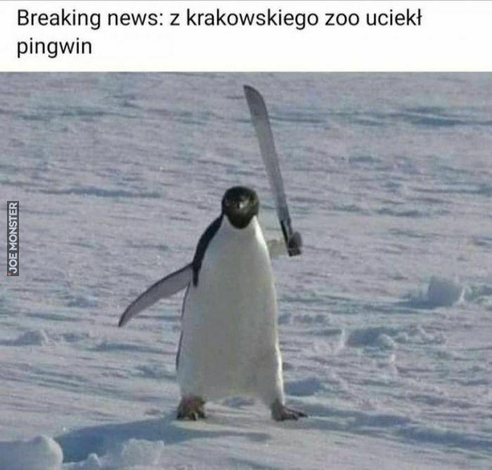 breaking news z krakowskiego zoo uciekł