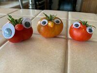 Pomidorowe nosacze