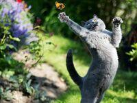 Spodobał mu się motylek