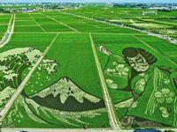 Sztuka na polu ryżowym, Inakadate, Japonia