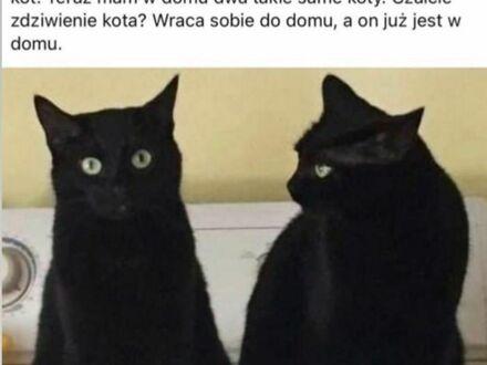 Więcej kotów