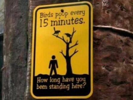 Lepiej nie stać pod tym drzewem zbyt długo