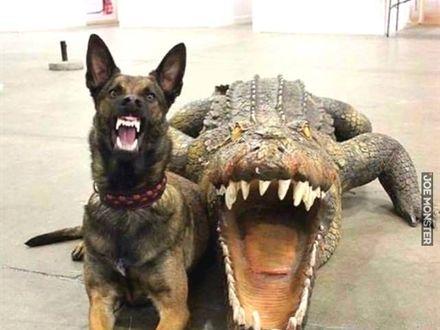 Dwie straszne bestie