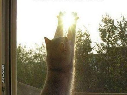 Łapie ostatnie promienie słońca