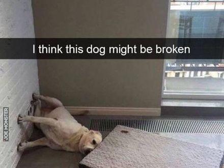 Myślę, że mój pies może być popsuty