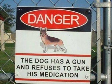 Pies ma pistolet i odmawia przyjmowania leków