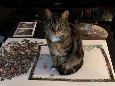 Puzzle chciałeś poukładać? Głupio by było, gdyby ktoś na nich usiadł