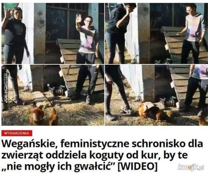 wegańskie feministyczne schronisko dla zwierząt