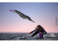 Pies łapiący frisbee autorstwa Claudio Piccoli