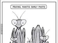 Zdjęcie rodzinne modliszek