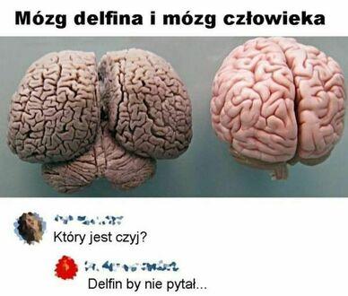 Prawda o mózgach