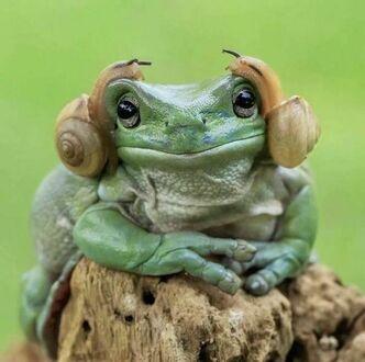 Pomóż mi, Obi-Wanie Kenobi, jesteś moją jedyną nadzieją