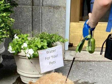Skorzystał z całej wody