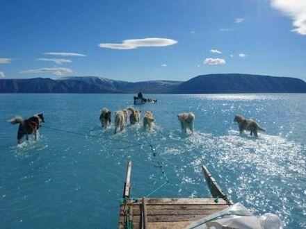Wodny zaprzęg w Arktyce