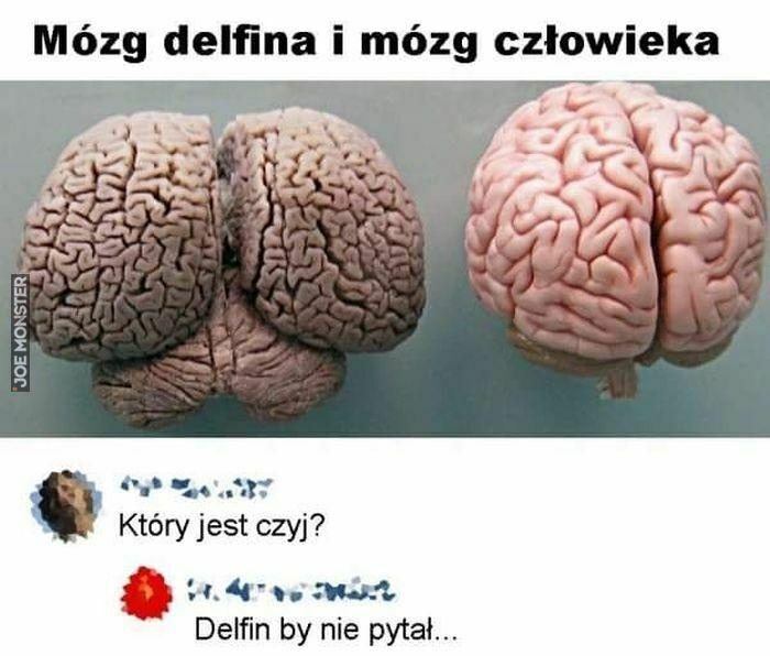 mózg gelfina i mózg człowieka