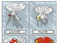 Rodzaje owadów
