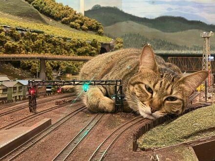Atak ogromnego kota
