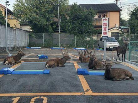Teraz to ich parking