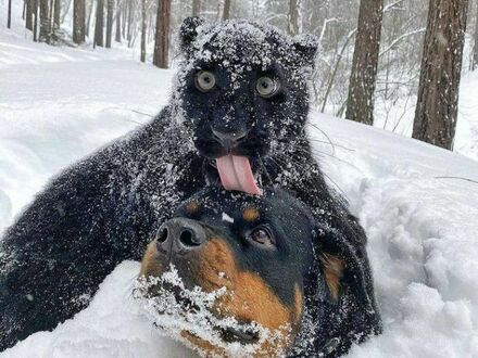 Zimowe igraszki