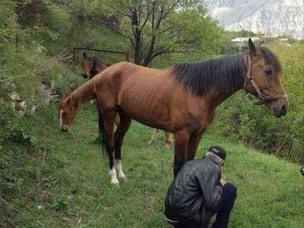 Zmutowany koń