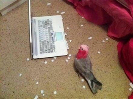 Zna ktoś przepis na papugę?