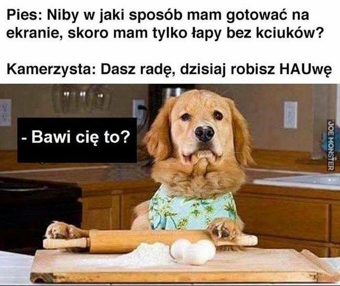 pies niby w jaki sposób mam gotować na ekranie