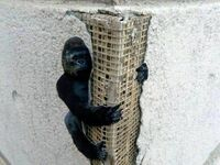 King Kong na narożniku