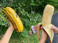Potężny banan