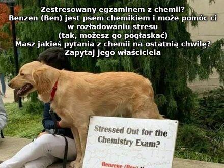 Pies niesie pomoc studentom