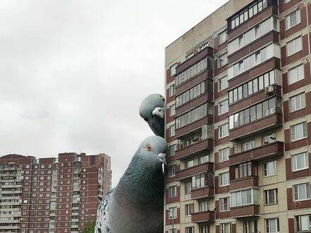 Obserwują balkony