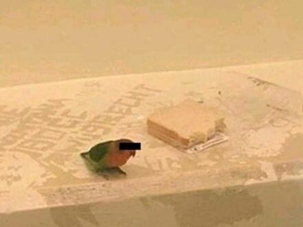 Duńska policja aresztowała mężczyznę i jego ptaka za włamanie. Ponieważ nie mieli klatki, wsadzili ptaka do więzienia z wodą i chlebem. Lokalna telewizja zadbała też o jego anonimowość