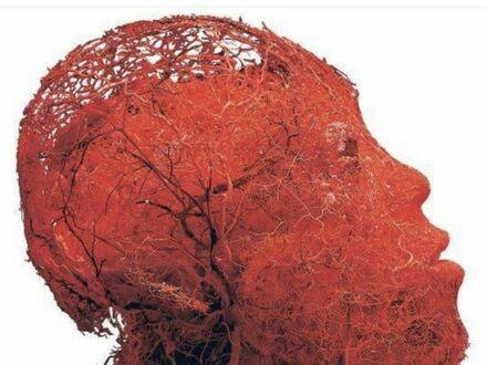 Jak wyglądają naczynia krwionośne w twojej głowie