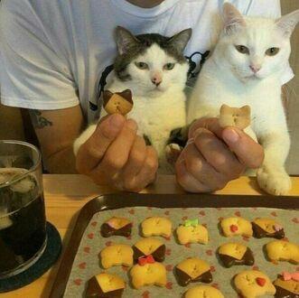 Każdy z kotów ma swoje ciastka