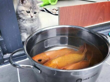 Ma chrapkę na rybkę