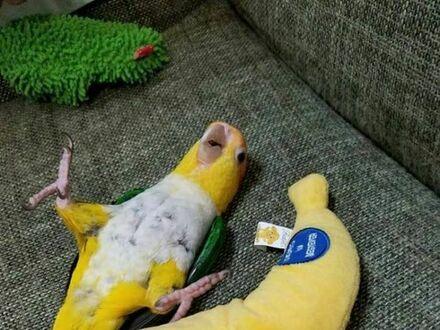 Teraz też jestem bananem
