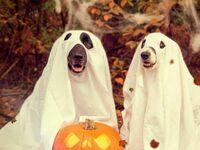 Każdy poczuł atmosferę Halloween