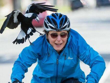 Nawet przyroda ma już dość rowerzystów