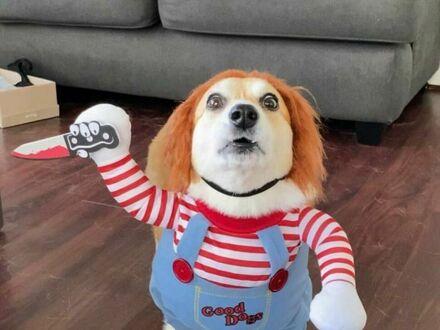 Pieseł Chucky